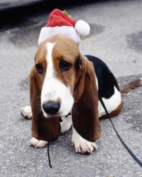 Joyeux Noël 2005 ! Christmas_dog
